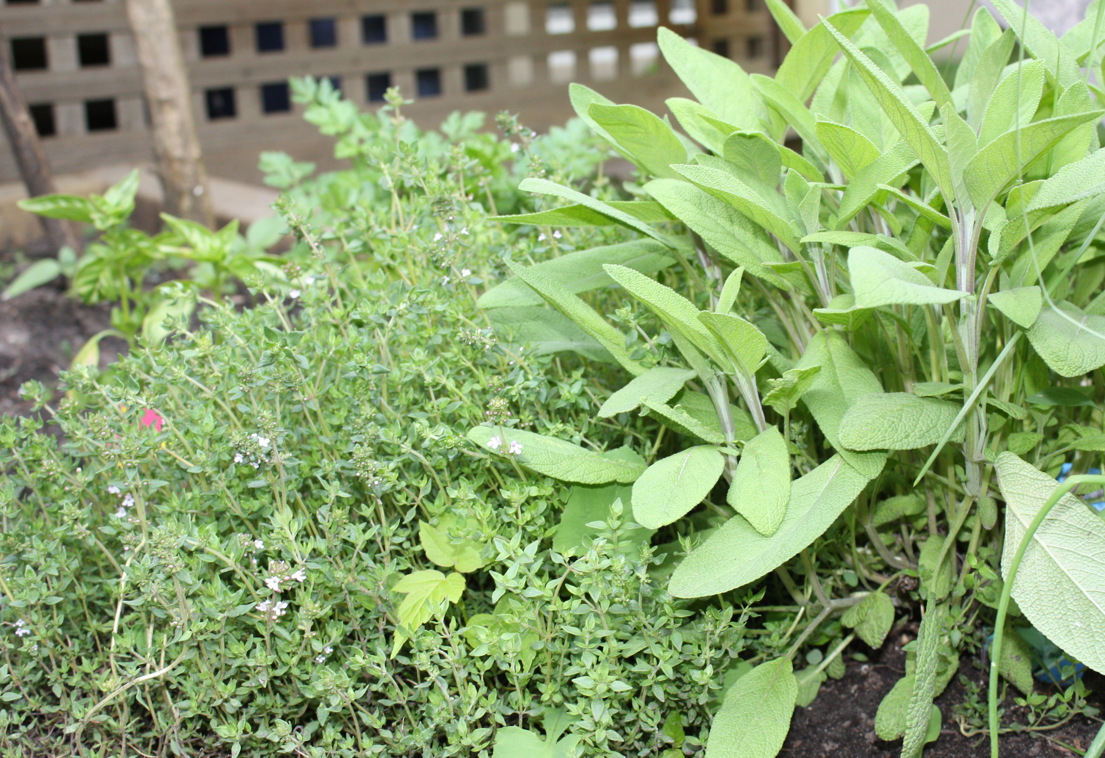 sage-and-thyme
