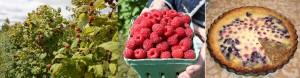 raspberry-montage