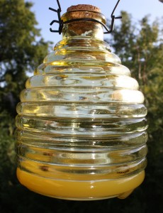 Glass bee catcher
