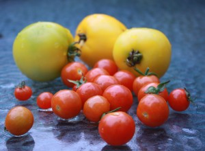 Yellow & Red tomatoes from my garden