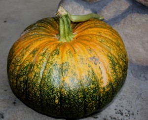 Our perfect plump pumpkin