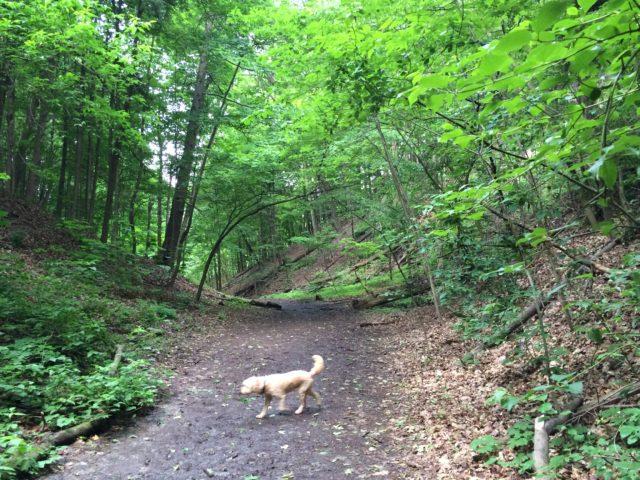 Puppy hike through the ravine